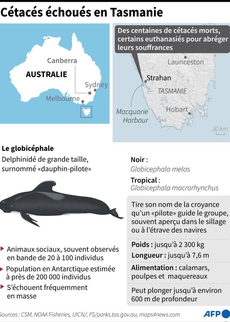 """Des """"dauphins-pilotes"""" euthanasiés en baie de Tasmanie"""