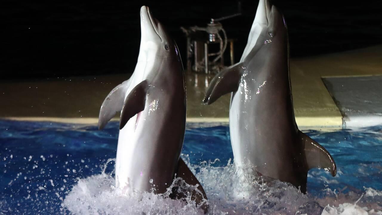 Spectacles de fauves ou dauphins: leur fin en débat à l'Assemblée