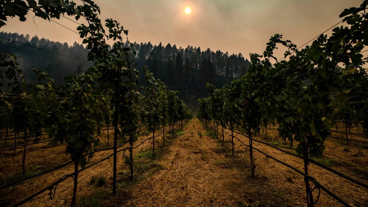 De nouveaux incendies ravagent encore un peu plus la Californie