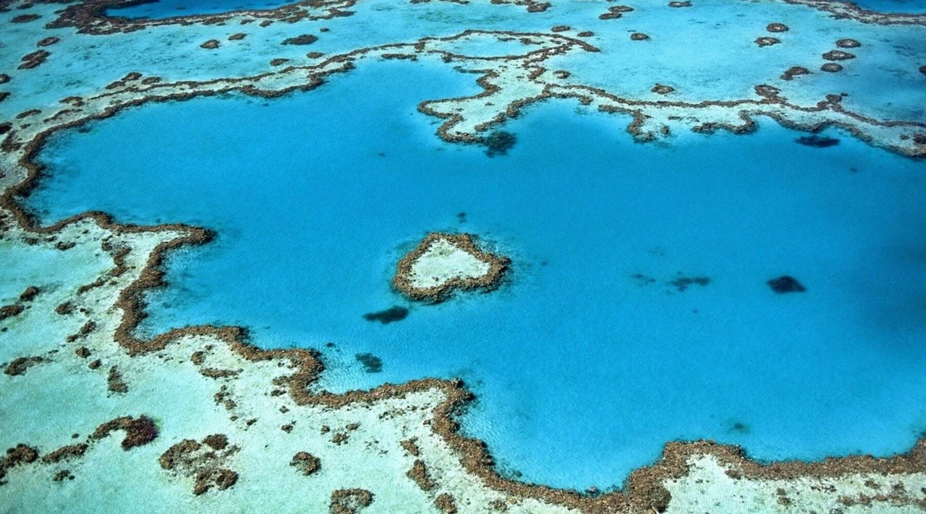 Les coraux, ces récifs essentiels mais fragiles