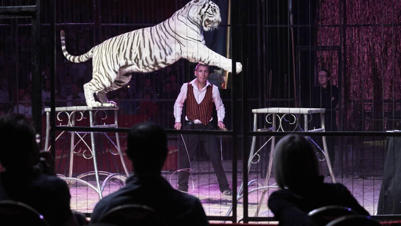 Les fauves et les dauphins ne feront plus le spectacle dans les cirques et les delphinariums