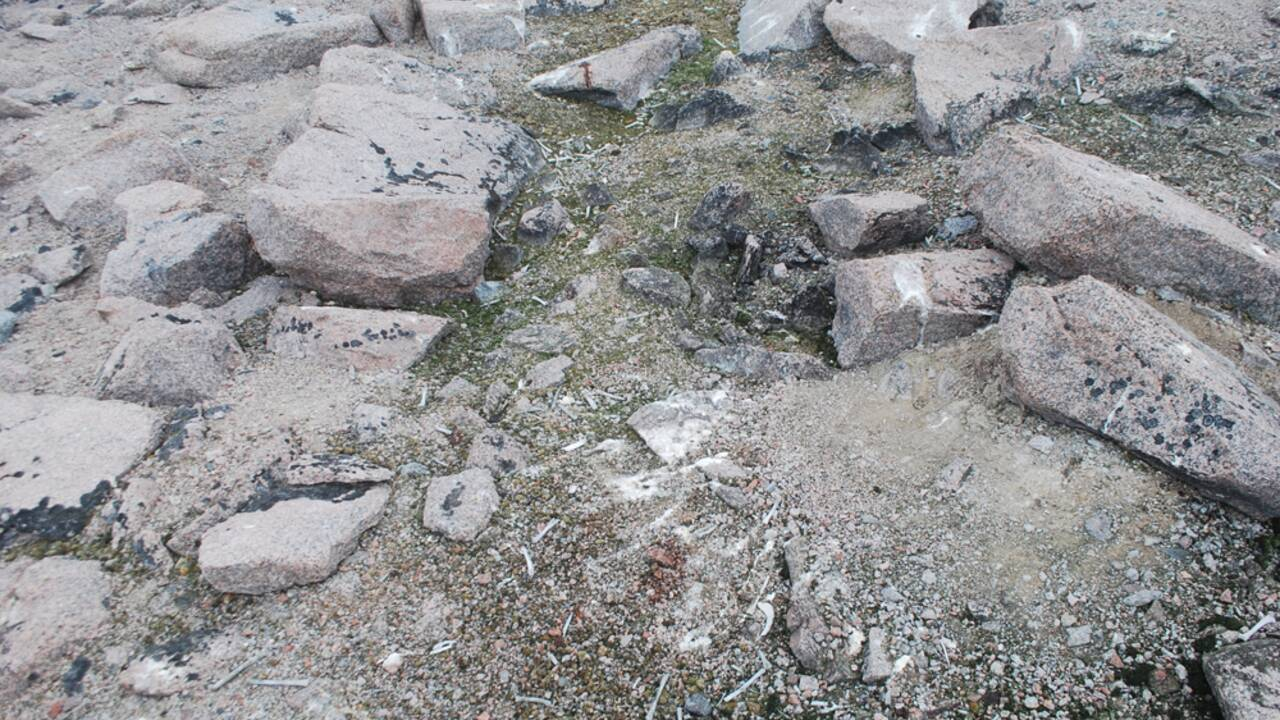 Les restes d'une ancienne colonie de manchots Adélie exhumés en Antarctique