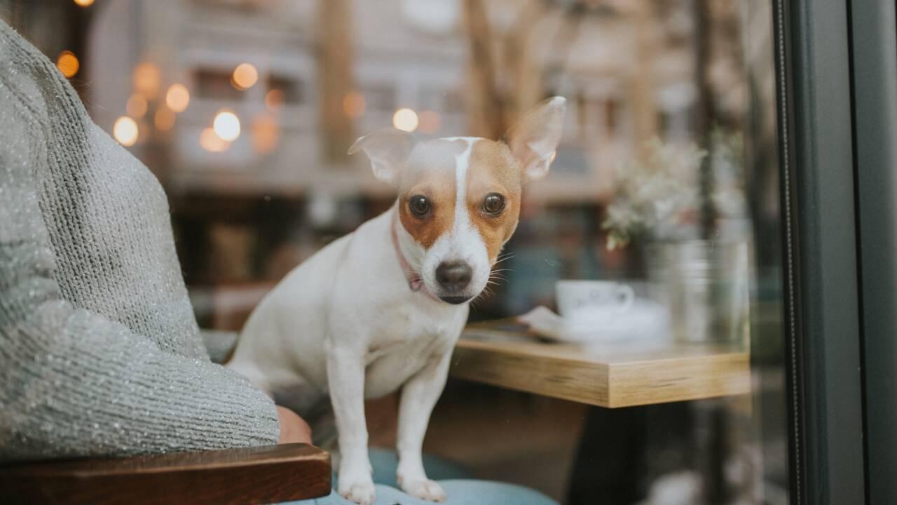 Le premier café accueillant les chiens fait des heureux en Arabie Saoudite