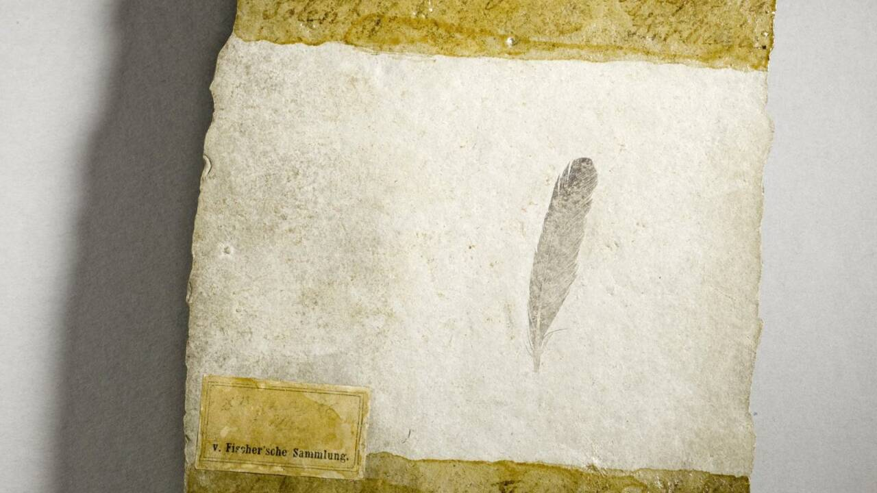 La première plume fossile de dinosaure jamais découverte livre de nouveaux secrets