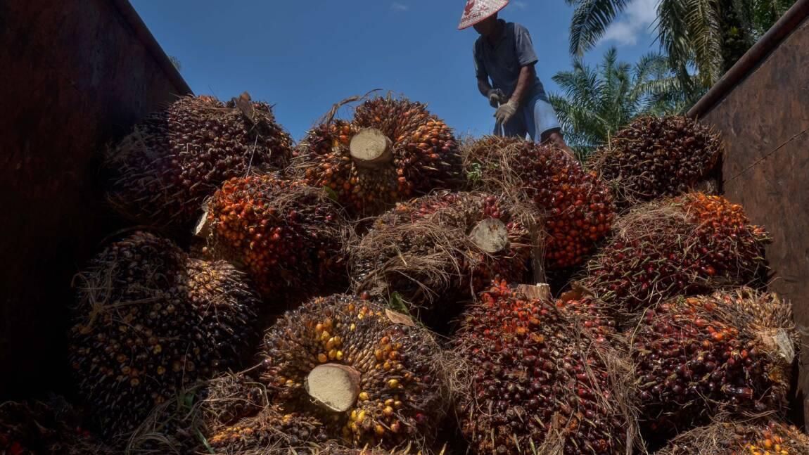 Un géant malaisien de l'huile de palme interdit aux Etats-Unis à cause d'abus