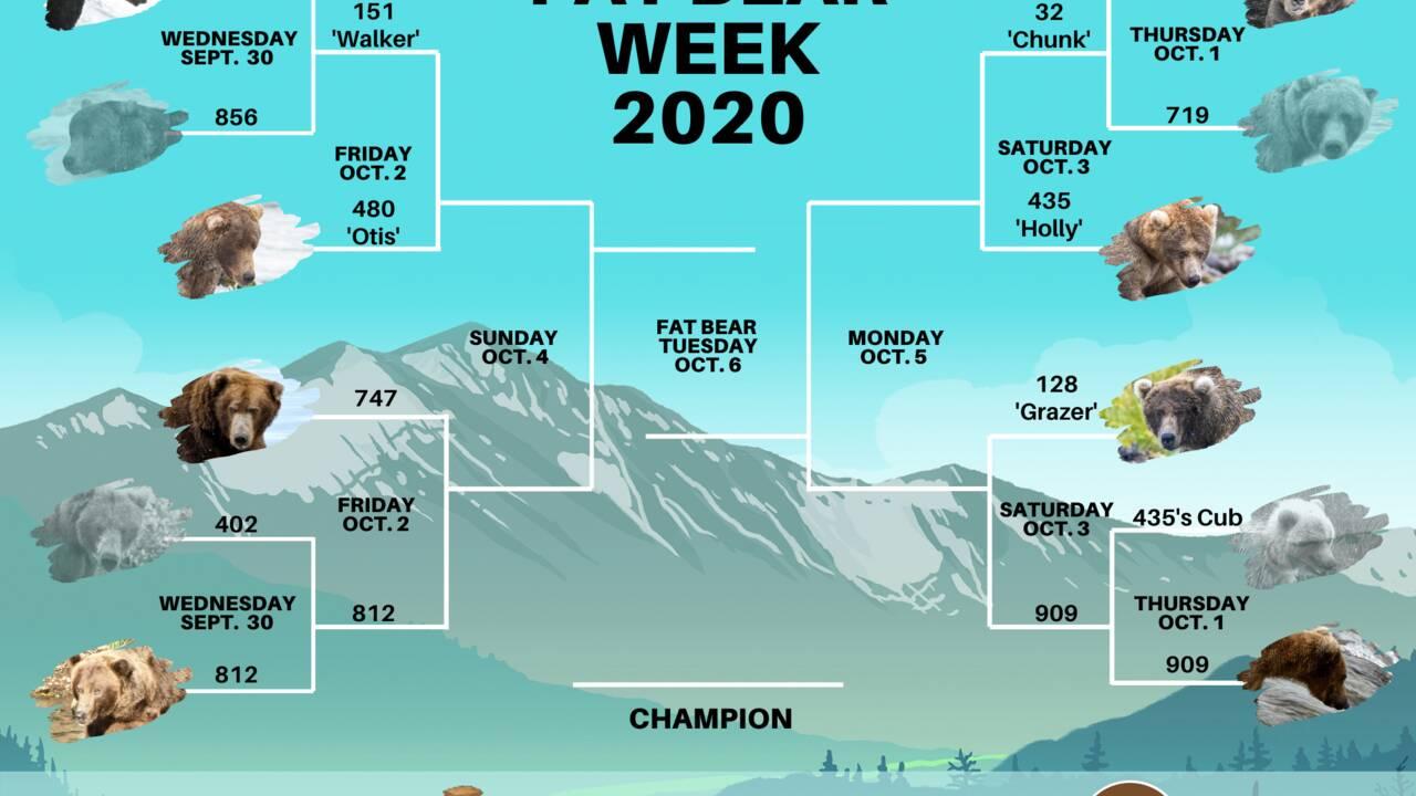 """Alaska : et """"l'ours le plus gros"""" du parc national de Katmai est..."""