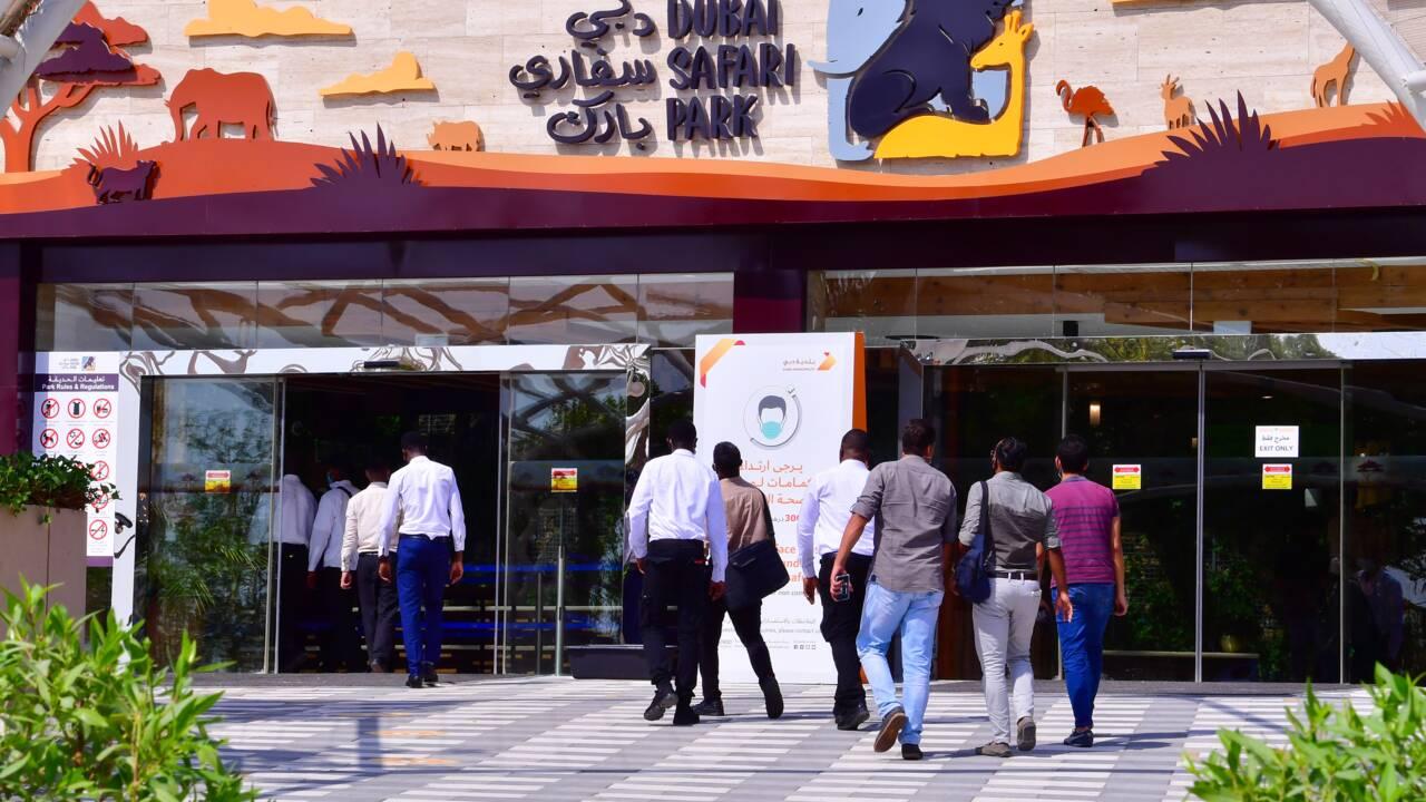 Le zoo de Dubaï rouvre après deux ans de travaux