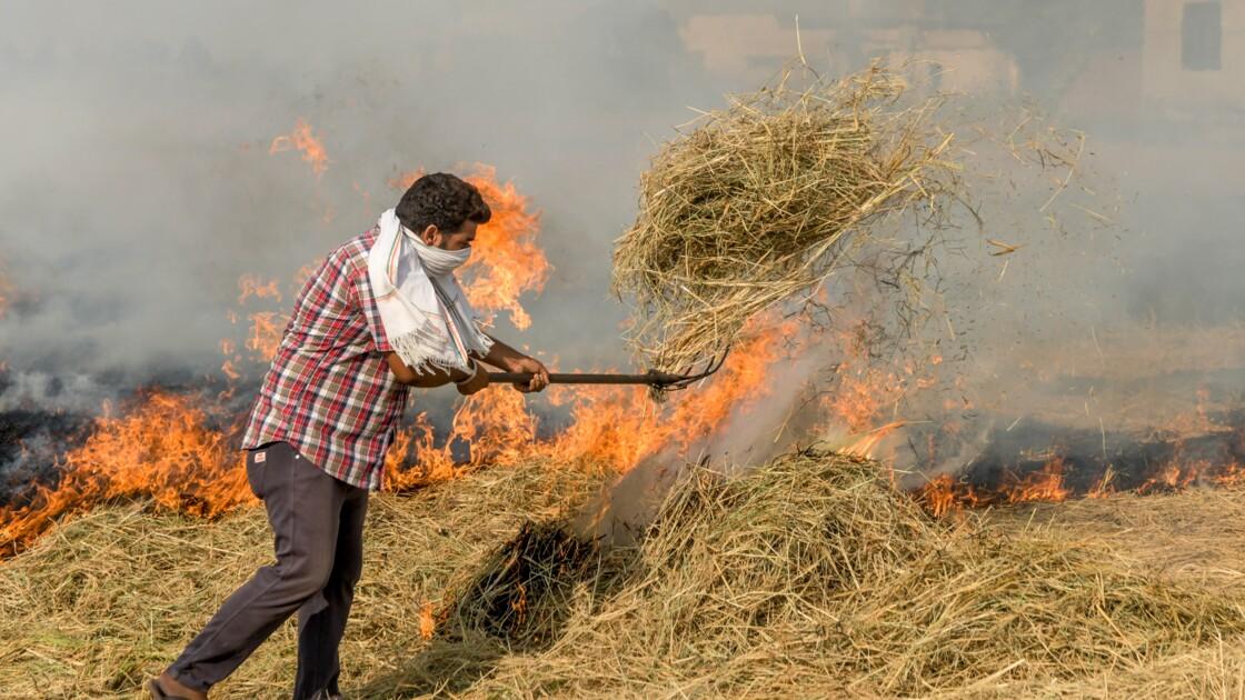Inde: New Delhi s'inquiète du virus et veut diminuer la pollution