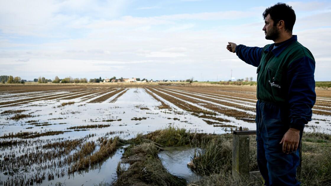 """Les intempéries dévastent les rizières du """"triangle d'or"""" italien"""