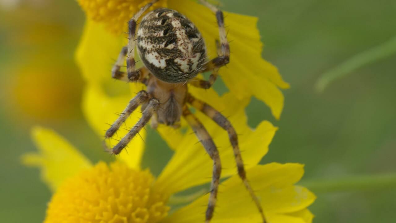 Un randonneur tombe sur une impressionnante toile d'araignée dans le Missouri