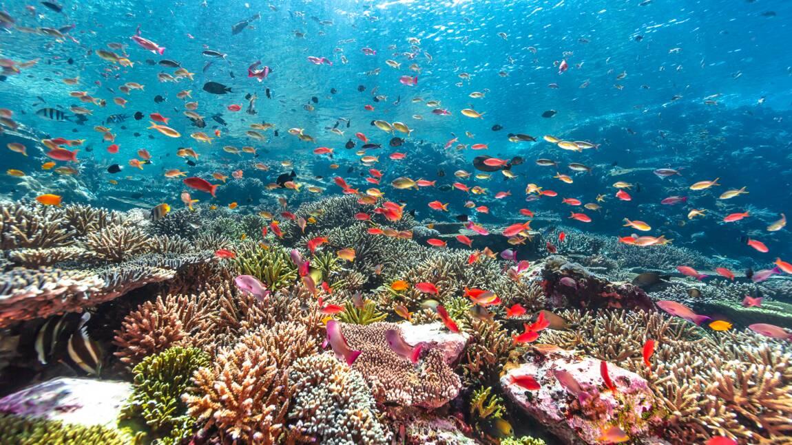 Musée océanographique de Monaco : à la découverte de pêcheurs indonésiens qui tentent de sauver le corail