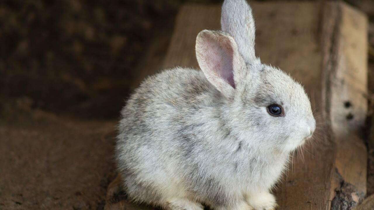 Des milliers d'animaux de compagnie retrouvés morts dans des colis en Chine