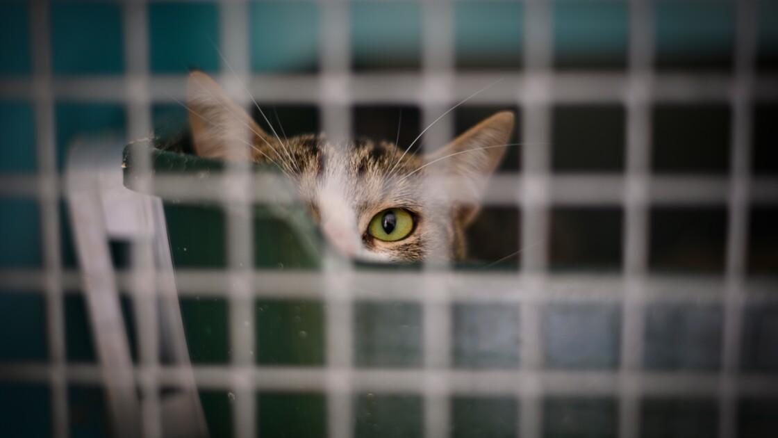 La SPA demande la fin de la vente d'animaux domestiques en animalerie