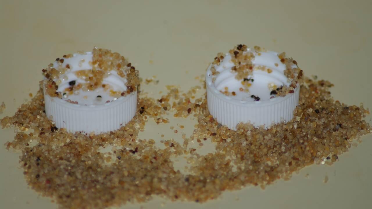 Comment certaines fourmis utilisent des outils pour échapper à la noyade