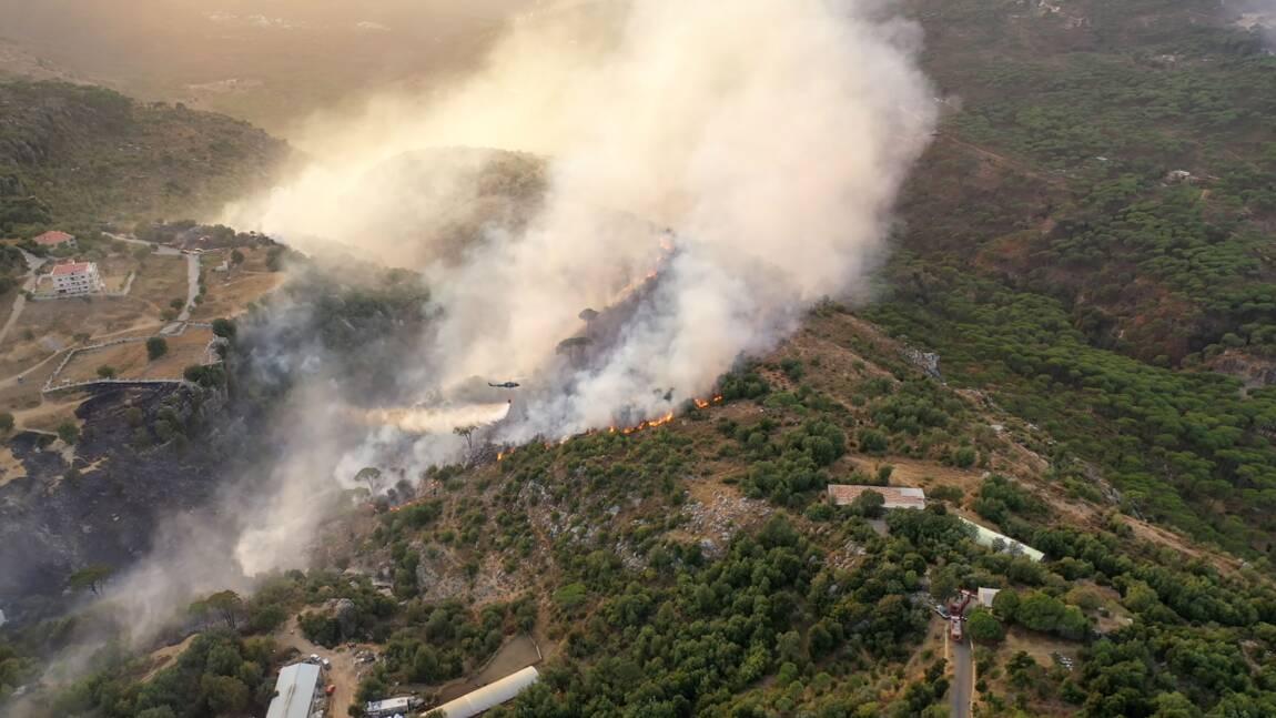 Les feux de forêt totalement maîtrisés en Syrie et au Liban