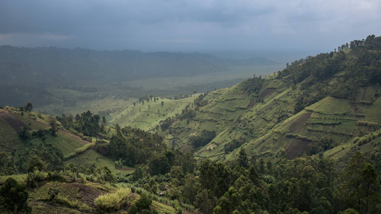 RDC : un écogarde tué dans une attaque au sein du parc national des Virunga