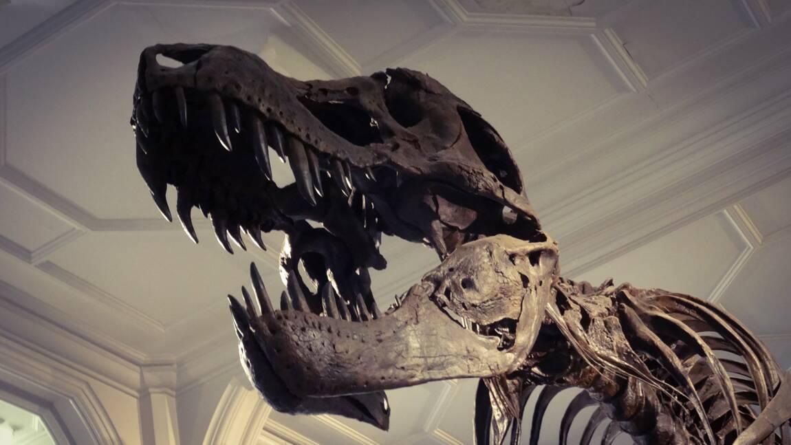 Stan le T. rex devient le fossile le plus cher jamais vendu aux enchères