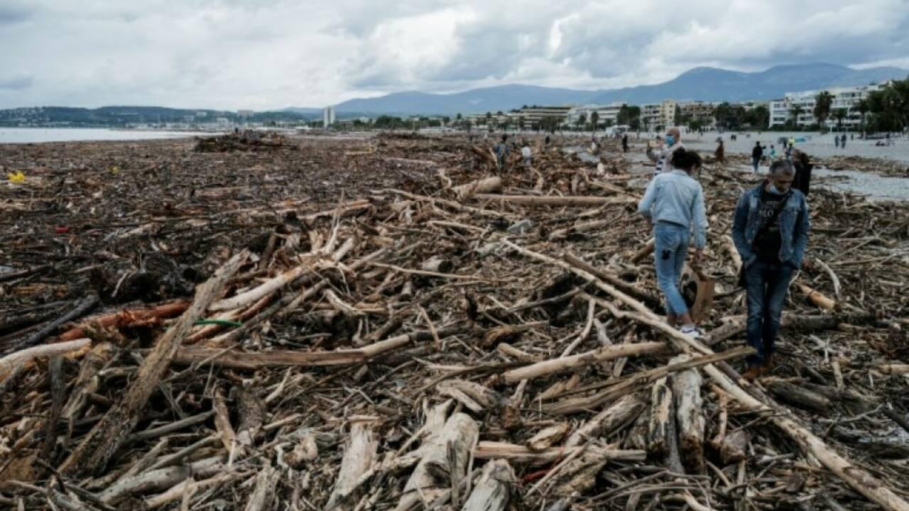 Des tonnes de troncs d'arbres en Méditerranée après les crues du 2 octobre