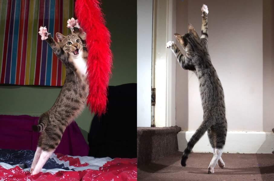 Edmund le chat gallois : félin farceur... et danseur