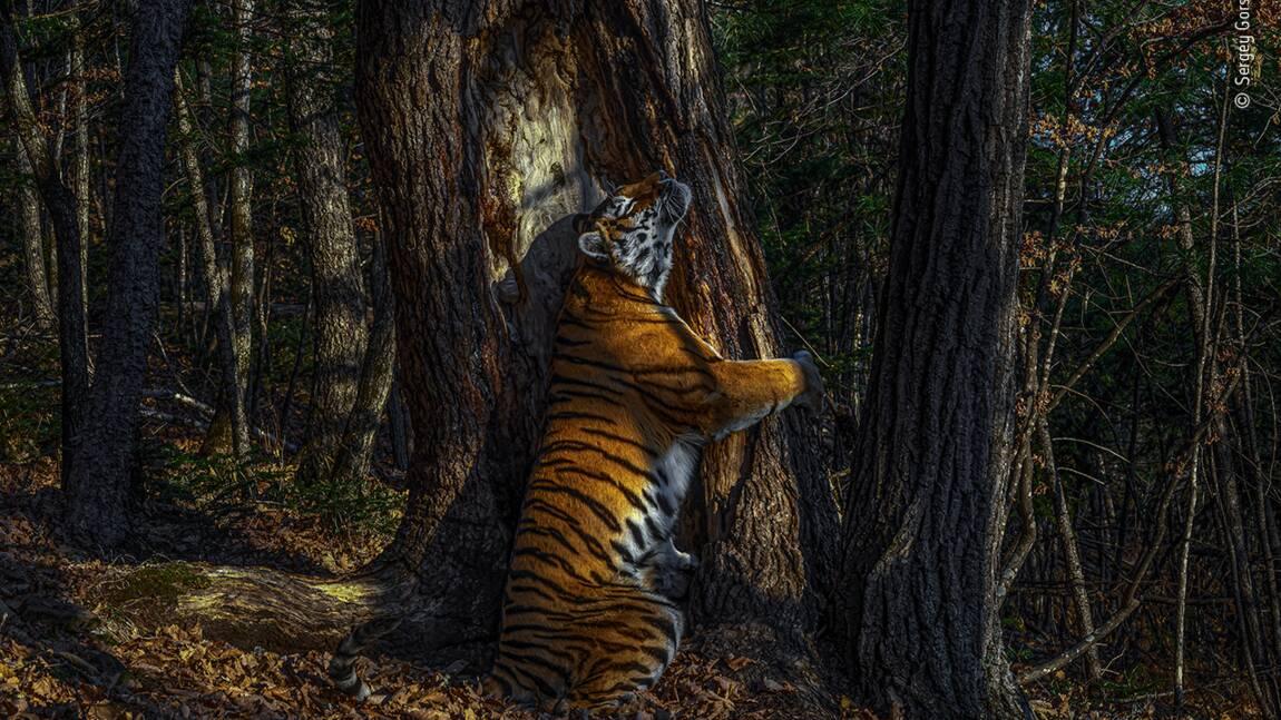 Les splendides photos récompensées par le Wildlife Photographer of the Year 2020