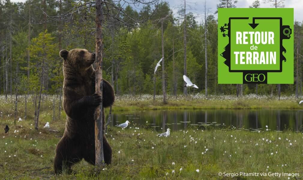 A l'affût des grands prédateurs en Finlande