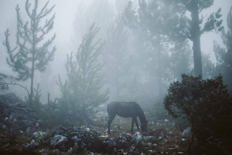 Cheval dans la brume