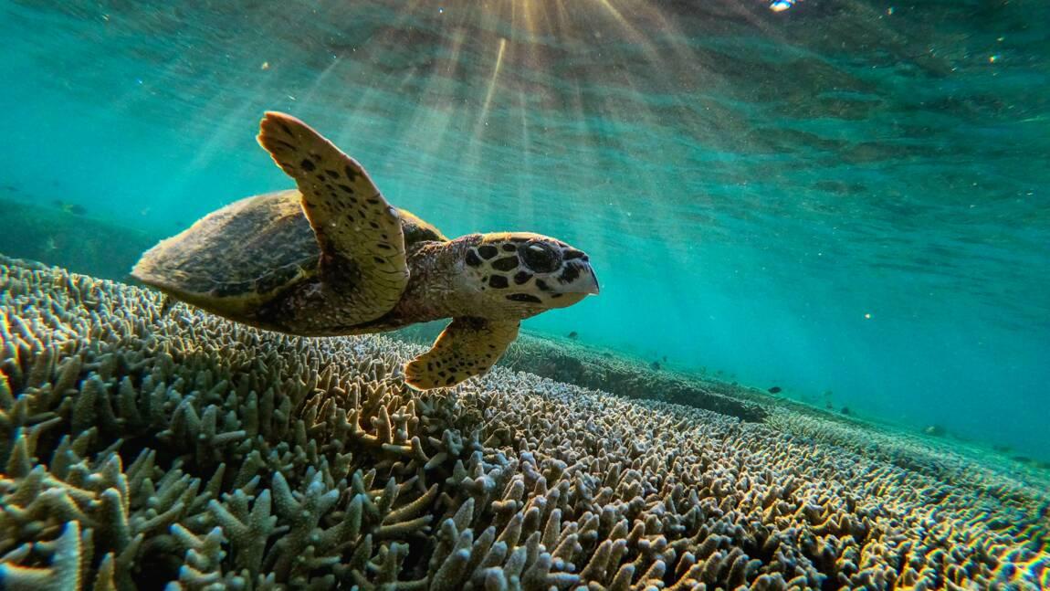 Les documentaires sur la nature aideraient à booster le bien-être et lutter contre l'ennui
