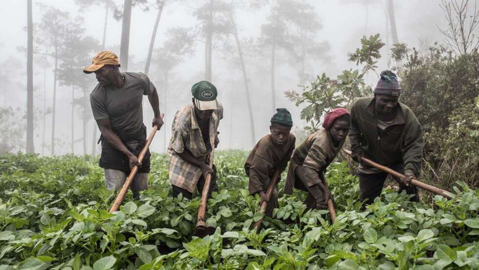 Les damnés de la forêt : ces Haïtiens contraints d'abattre des arbres pour survivre