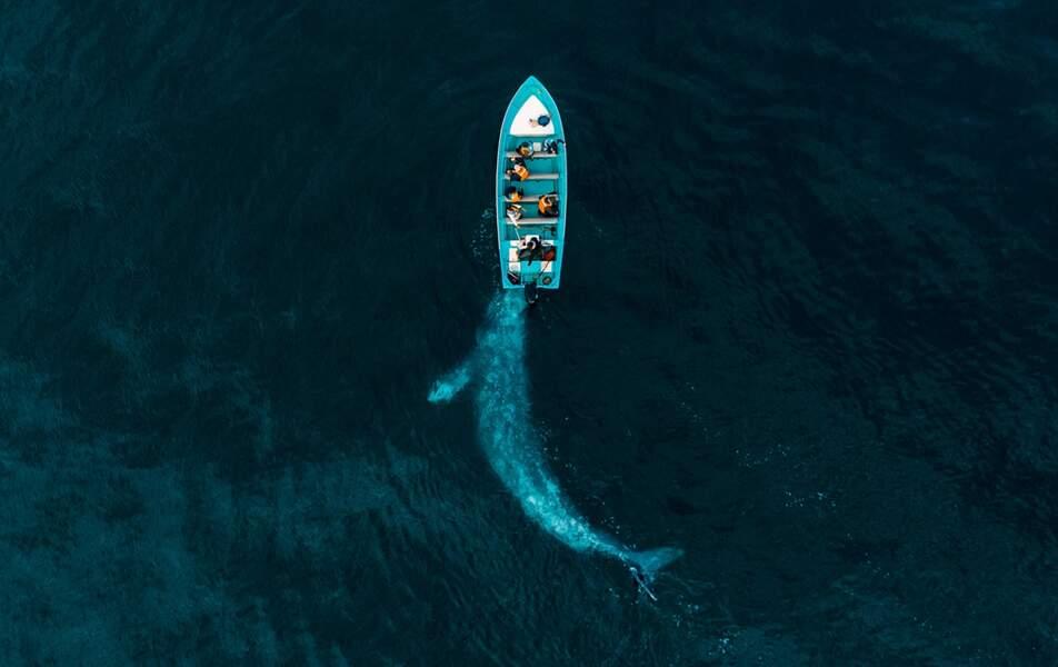 La baleine qui aimait les touristes