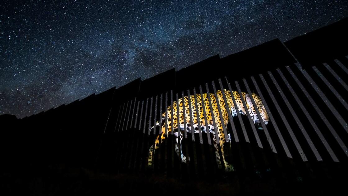 Ces stupéfiantes photos de vie sauvage primées au European wildlife photographer of the year 2020