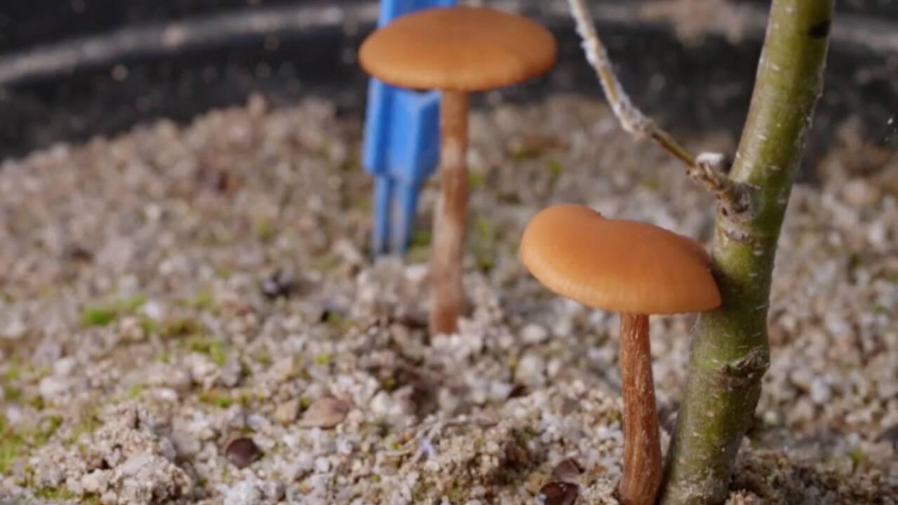 """""""Le génie des arbres"""" : à la découverte des fabuleuses capacités cachées sous l'écorce"""