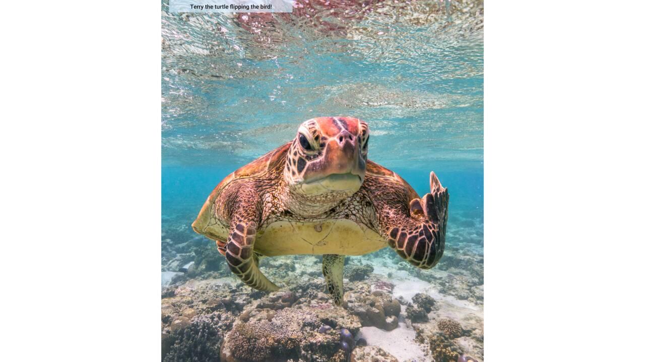 Et les drôles de photos d'animaux gagnantes des Comedy Wildlife Photography Awards 2020 sont...