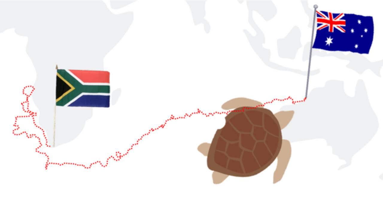 Après un périple de 40000 km, Yoshi la tortue a envoyé sa dernière transmission