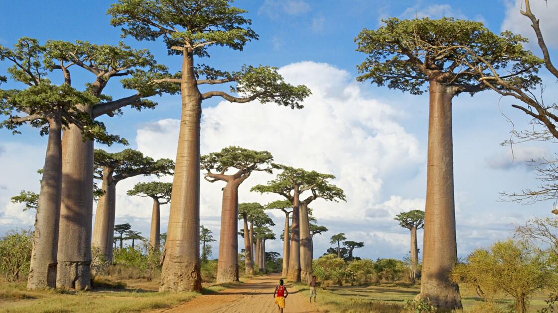 Instantané de photographe : Madagascar, l'allée des baobabs par Tuul et Bruno Morandi