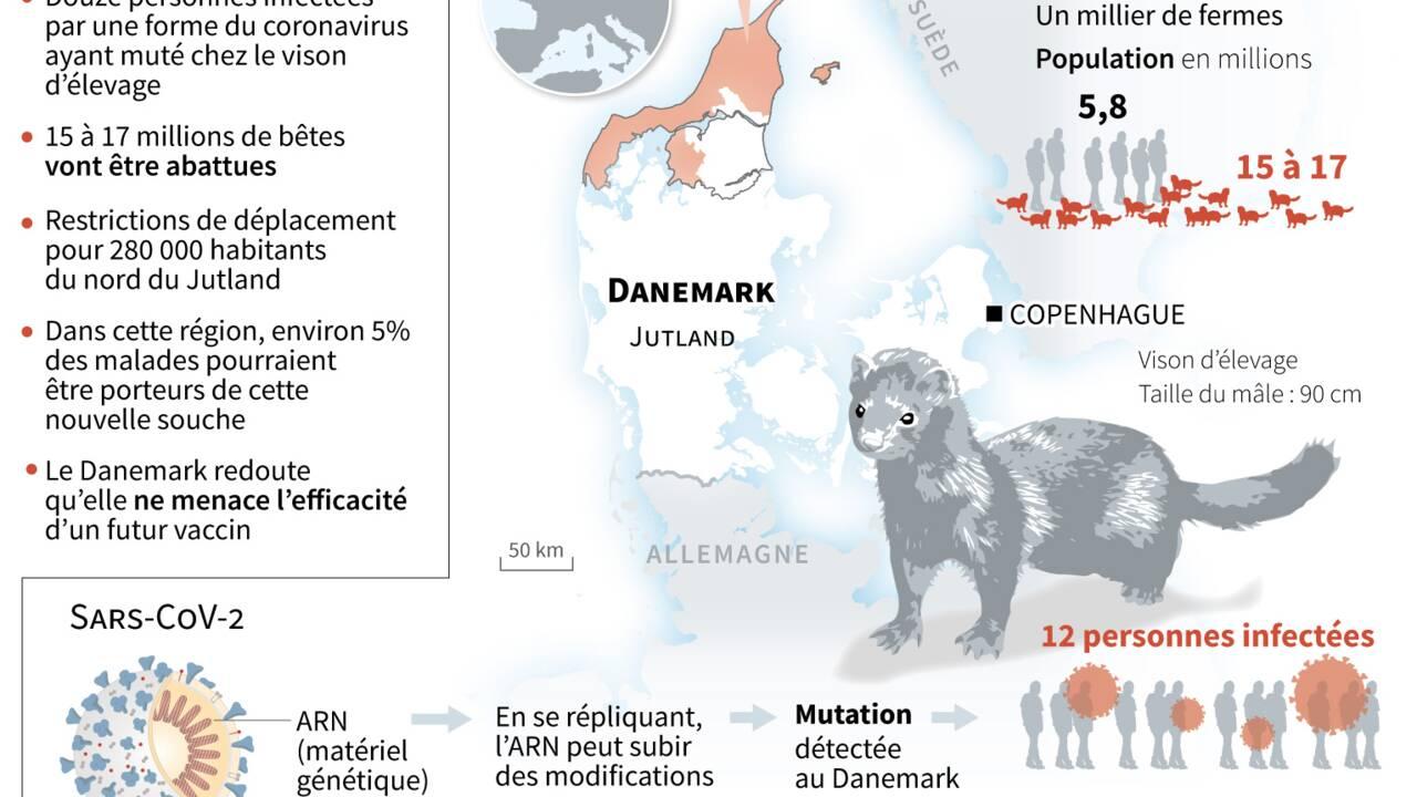 Mutation du coronavirus chez le vison: le Danemark se défend de semer la panique