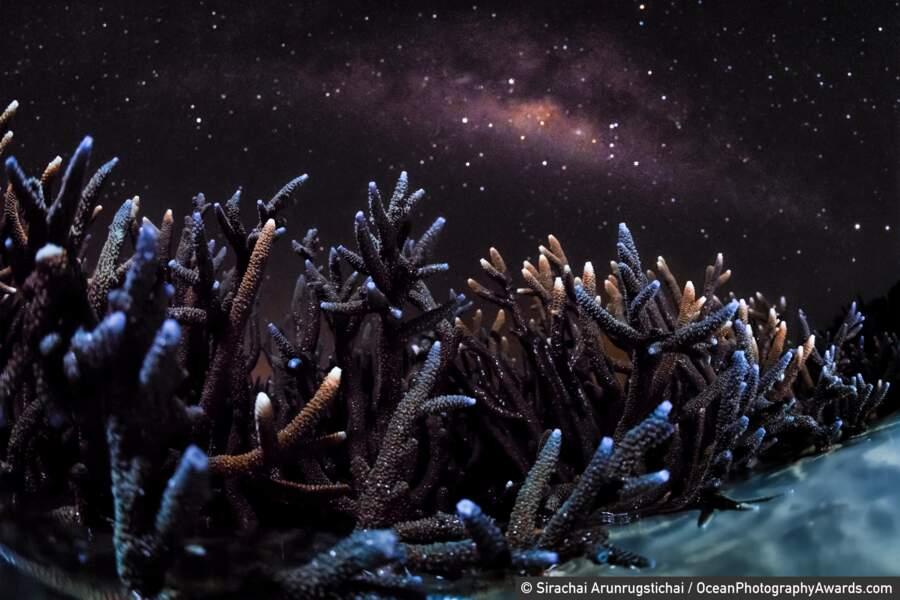 Colo de coraux à marée basse