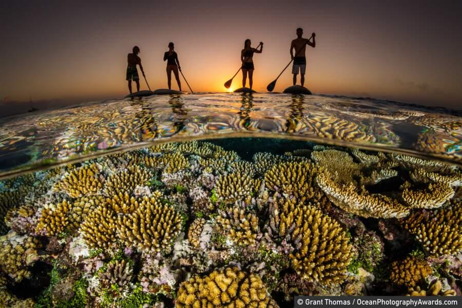 Des coraux et des hommes