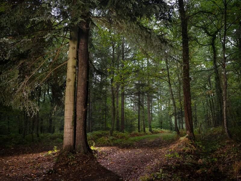 Les arbres amoureux du bois aux Moines