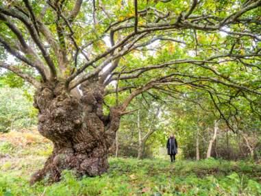 Votez pour les plus beaux arbres français de l'année 2020