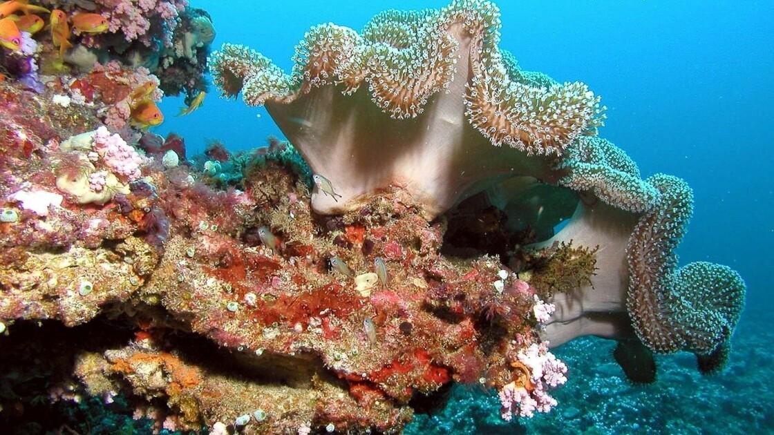 Quelle est la situation des coraux dans le monde?