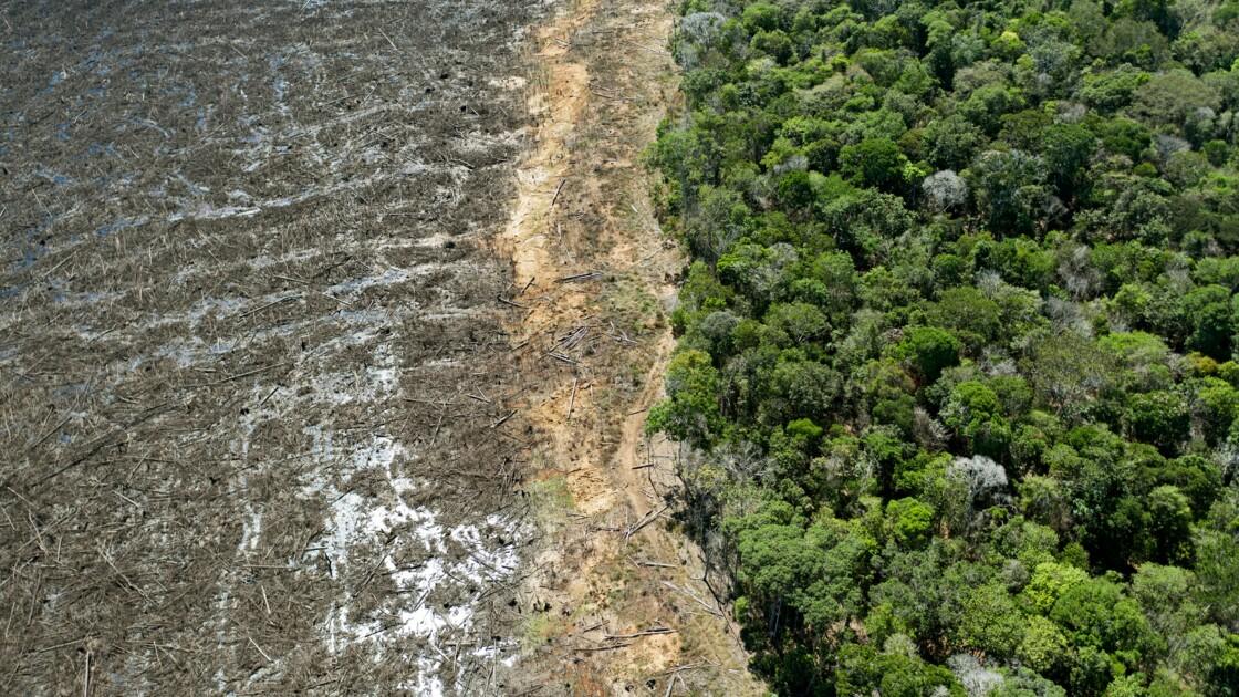 Brésil: la déforestation repart à la hausse en Amazonie