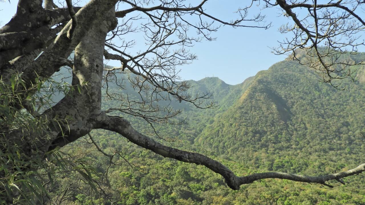 Myanmar : une nouvelle espèce de langur découverte déjà en danger d'extinction