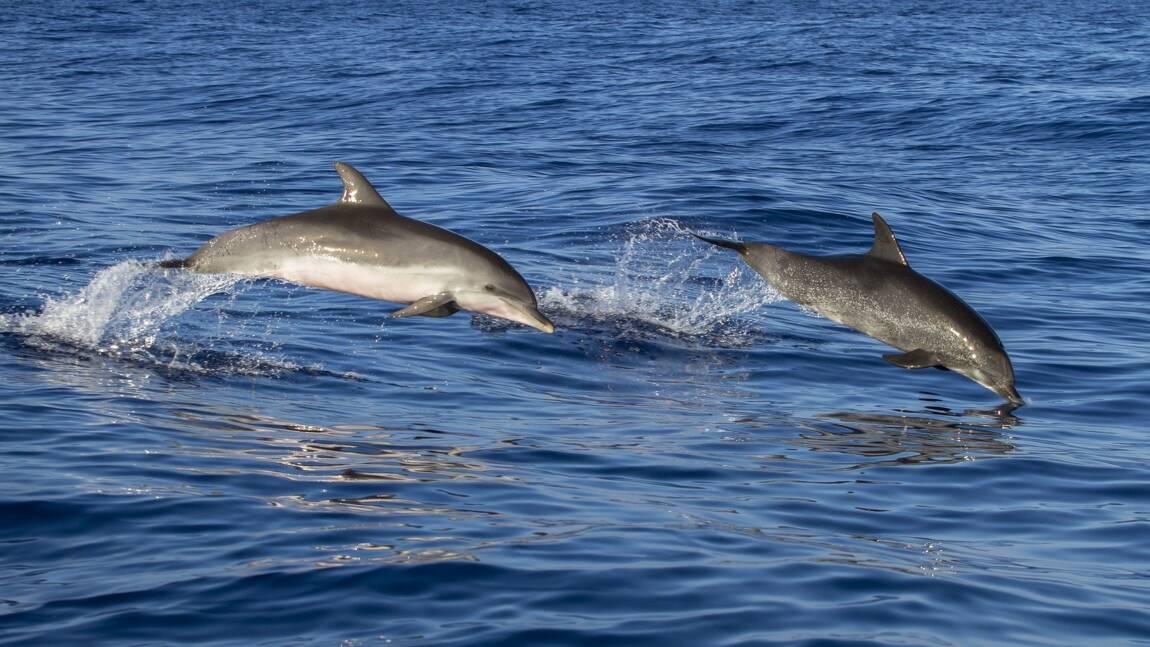 Les 5 infos insolites sur le dauphin