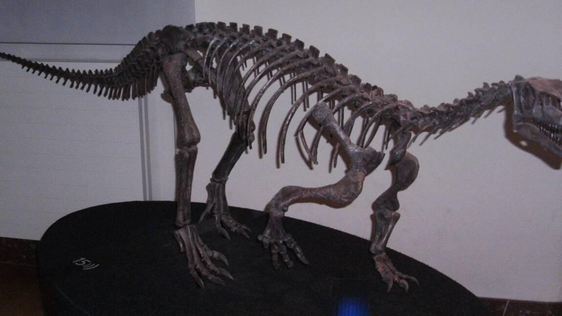 Comment l'activité volcanique a assis la domination des dinosaures à long cou
