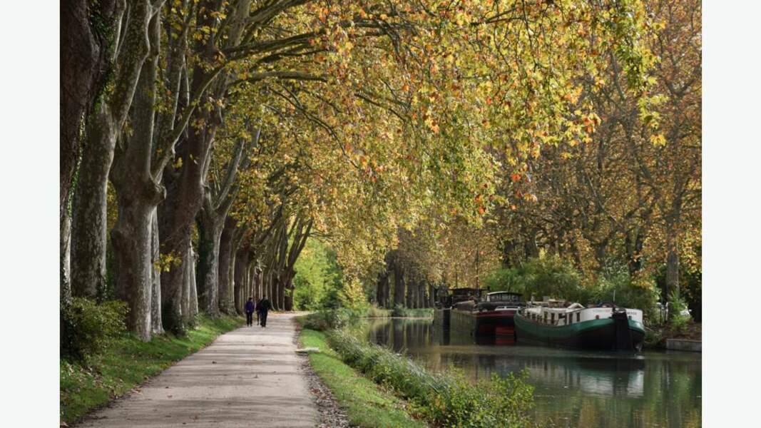 Le long du Canal du Midi, au sud de Toulouse