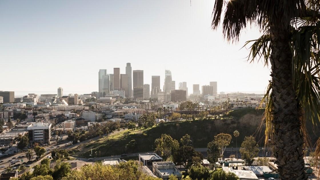 Los Angeles s'allie à Google pour cartographier ses arbres et lutter contre la chaleur