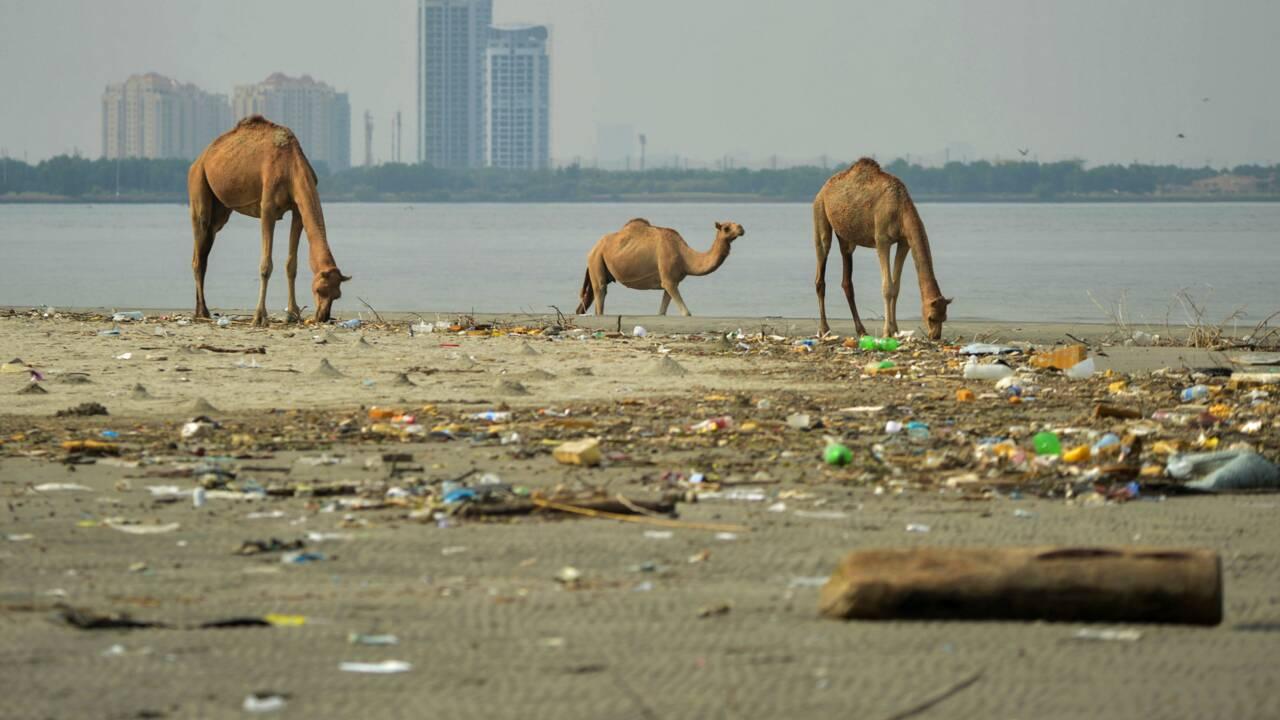 """Pakistan: un gigantesque projet immobilier menace les """"bébés mangroves"""" à Karachi"""