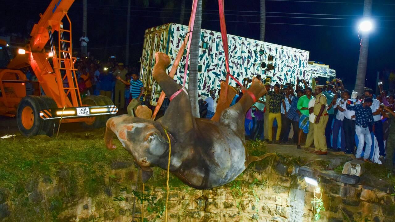 Inde : un éléphant tombe dans un puits, 50 sauveteurs, 16 heures et une grue pour le libérer