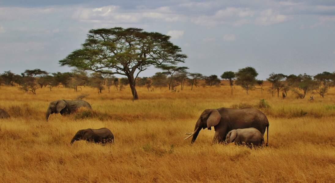 Safari équestre à la rencontre des big five en Tanzanie