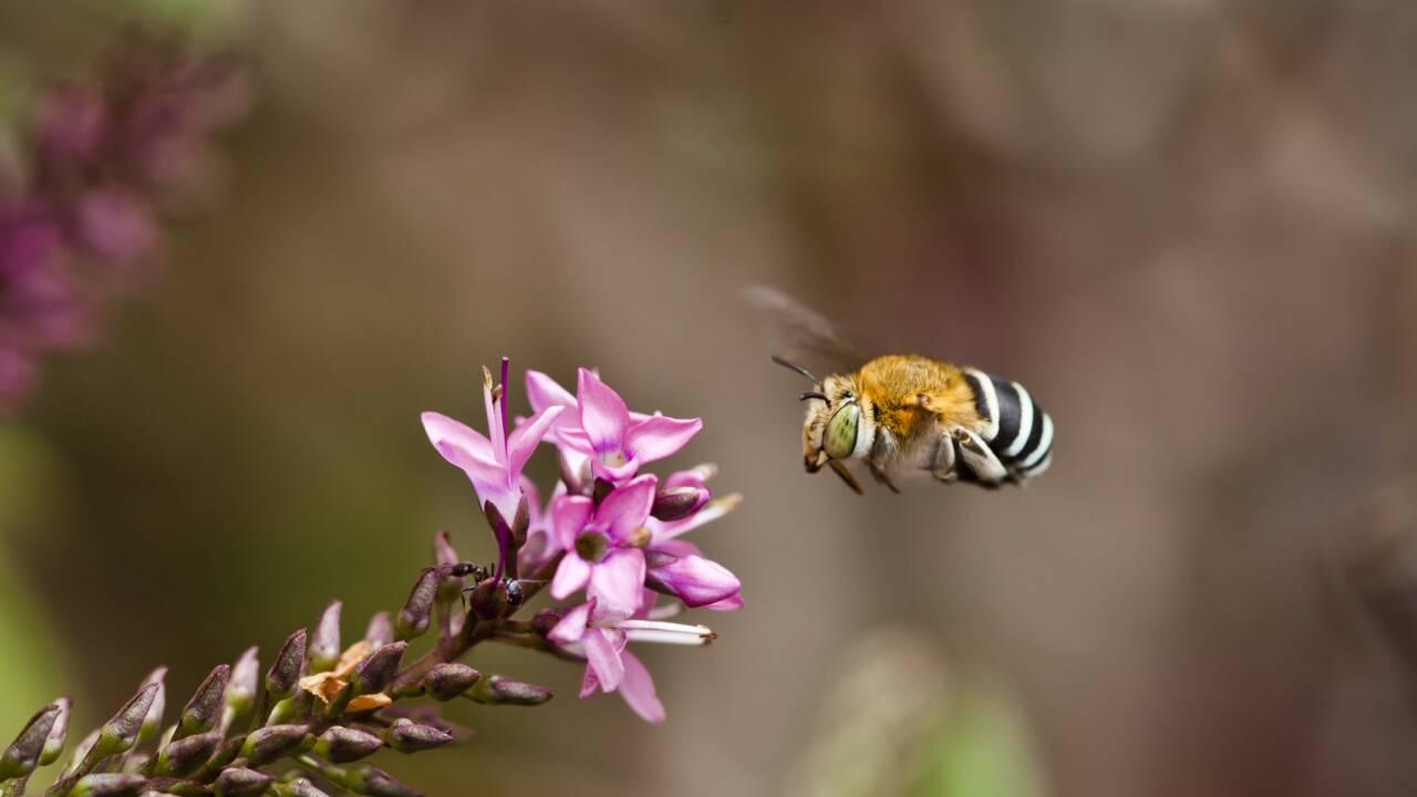 Découvrez la première carte des espèces d'abeilles dans le monde